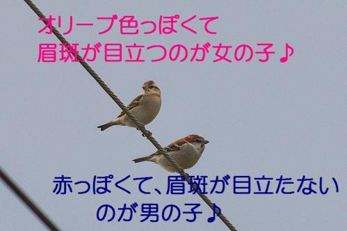 090_20121221215031.jpg