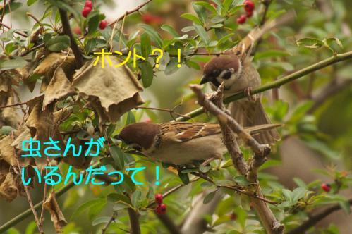 090_20121225223351.jpg
