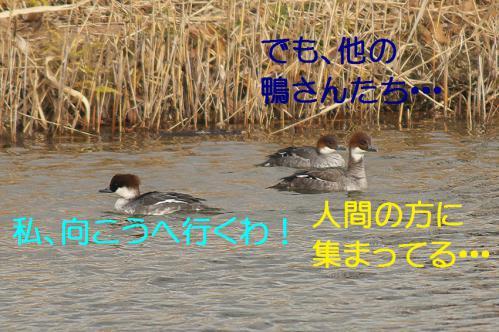 090_20121227213551.jpg