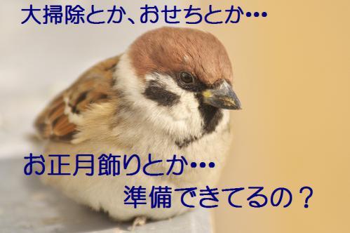 090_20121229231726.jpg
