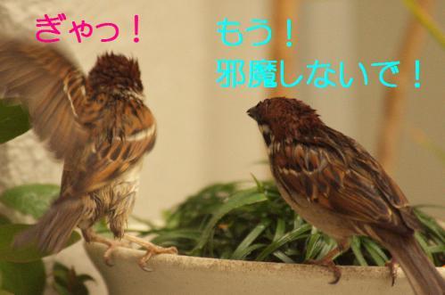 090_20121230221234.jpg