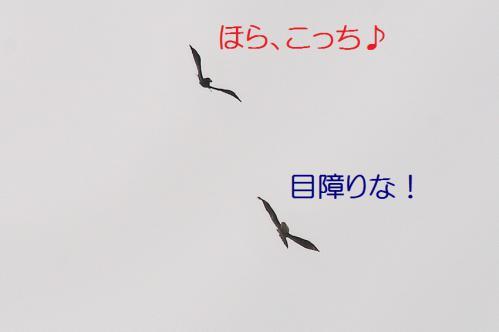 090_20130105211116.jpg