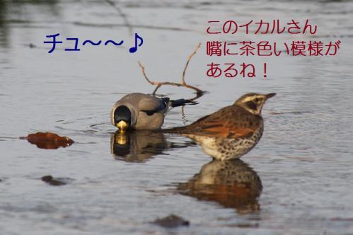 090_20130121215337.jpg