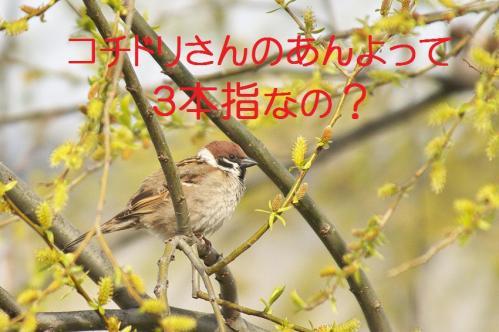 100_20120426195348.jpg
