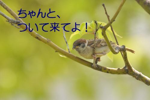 100_20120531225208.jpg