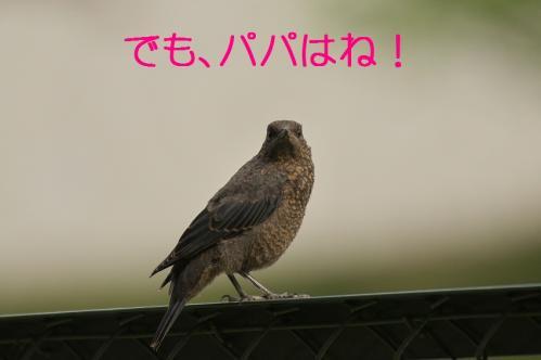 100_20120613233608.jpg
