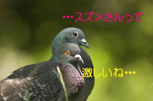 100_20120731204636.jpg
