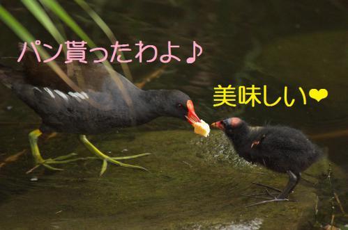 100_20120821211009.jpg