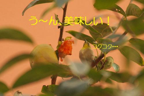 100_20121030223206.jpg