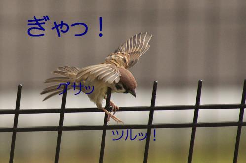 100_20121103224851.jpg