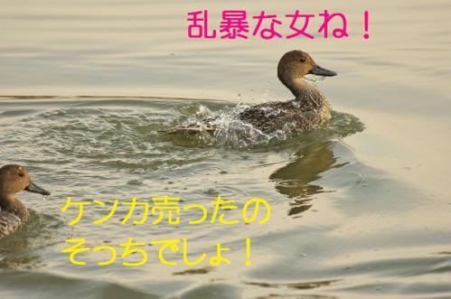 100_20121112215353.jpg