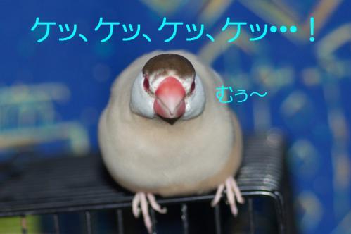 100_20121117212617.jpg