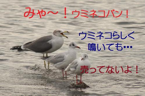 100_20121124215544.jpg