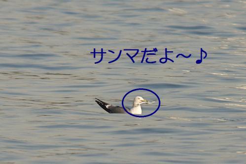 100_20121125192234.jpg