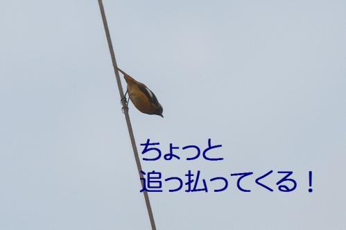100_20121126223059.jpg