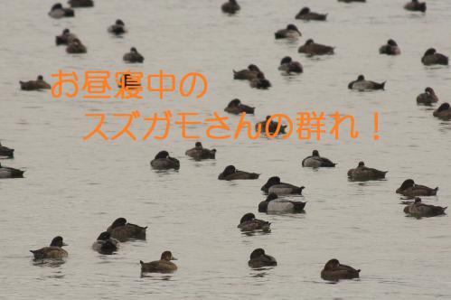 100_20121130220651.jpg