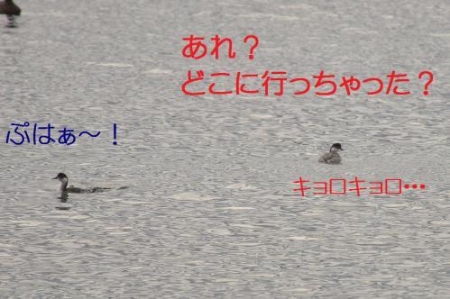 100_20121201214910.jpg