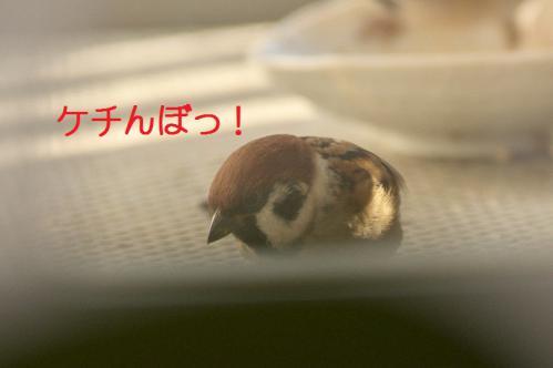 100_20121202191719.jpg