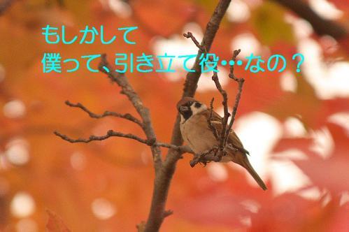 100_20121206222509.jpg