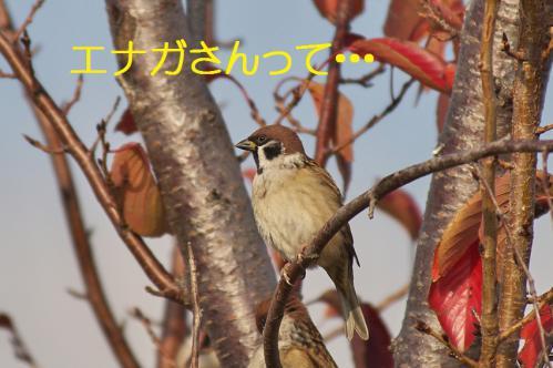 100_20121213214639.jpg