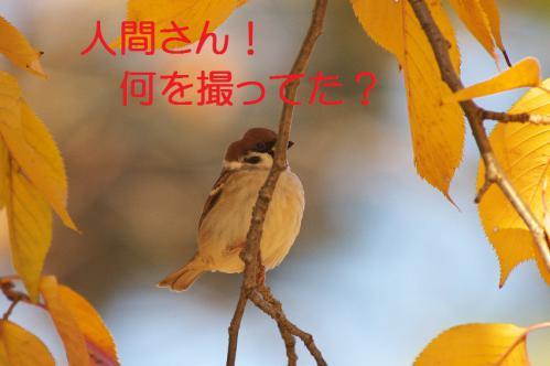 100_20121214214825.jpg