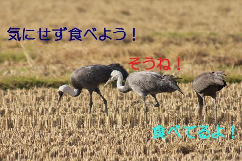 100_20121215200831.jpg