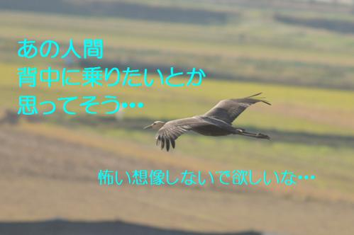 100_20121216202813.jpg