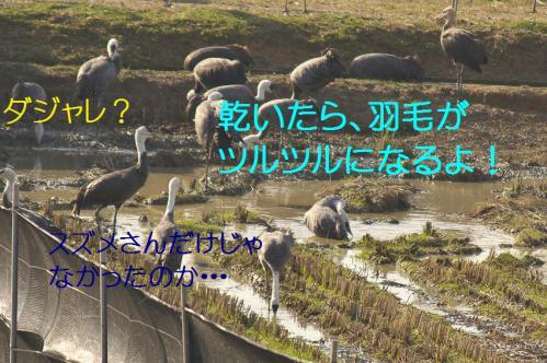 100_20121218215622.jpg
