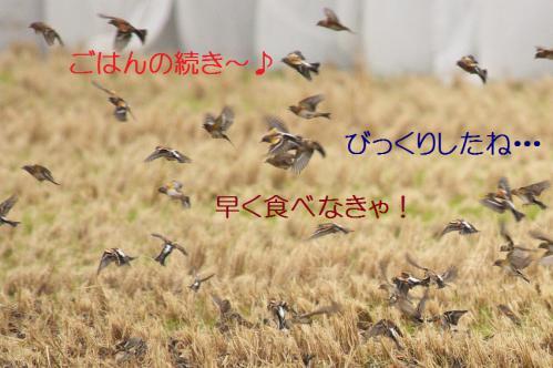 100_20121220193610.jpg