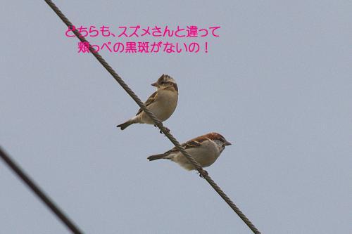 100_20121221215036.jpg