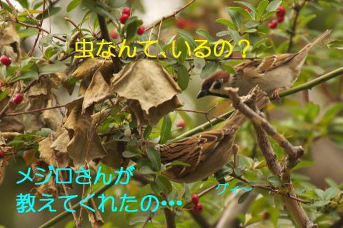100_20121225223355.jpg