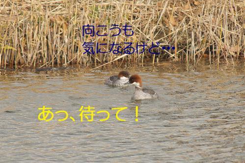100_20121227213556.jpg