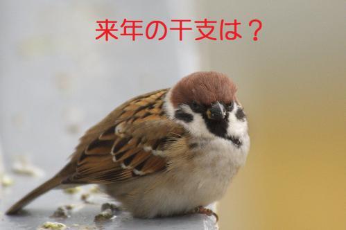 100_20121228215747.jpg