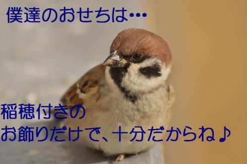 100_20121229231728.jpg