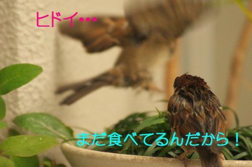 100_20121230221237.jpg