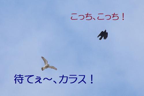 100_20130105211123.jpg