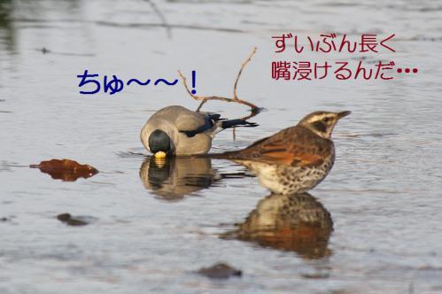 100_20130121215339.jpg