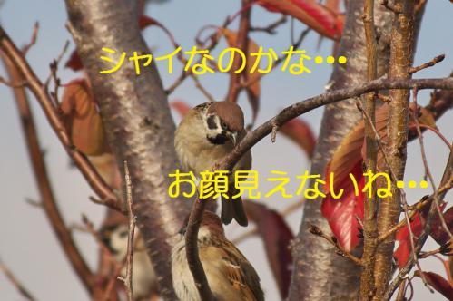 105_20121213214642.jpg