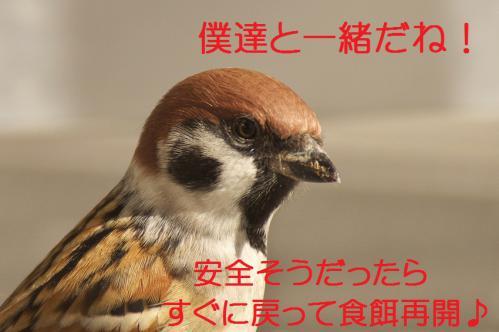105_20121220193613.jpg