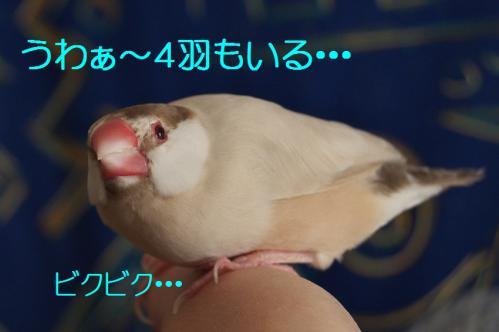 105_20121223184104.jpg
