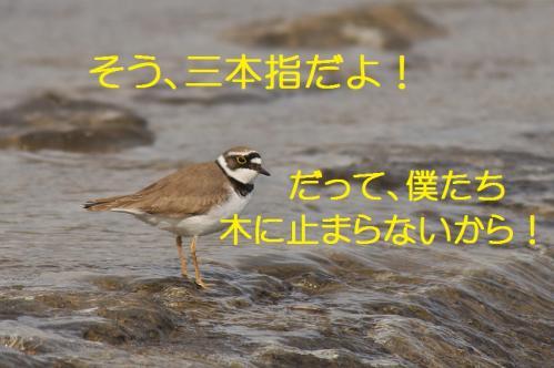 110_20120426195347.jpg