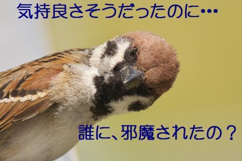 110_20120501203930.jpg