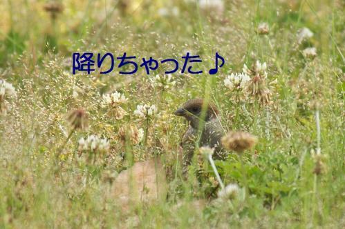 110_20120531225207.jpg