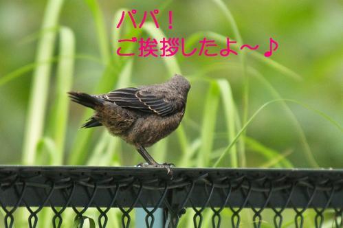 110_20120612215109.jpg