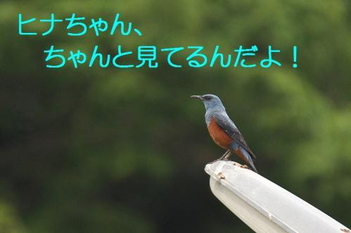 110_20120613233607.jpg
