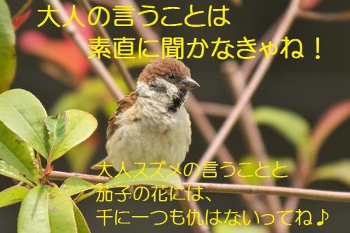 110_20120711222547.jpg
