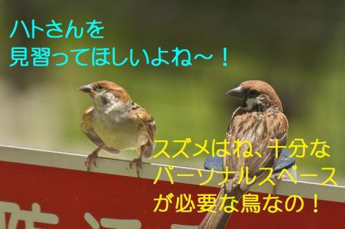 110_20120731204636.jpg