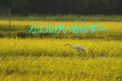 110_20120904224814.jpg