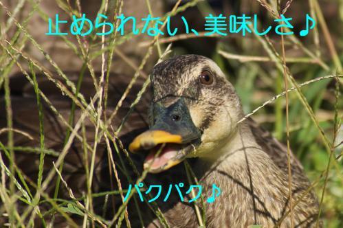 110_20120928220412.jpg