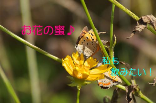 110_20120930203644.jpg